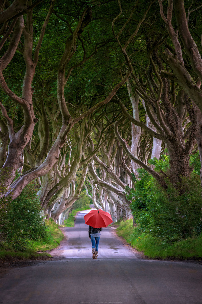 A Walk In The Dark Hedges