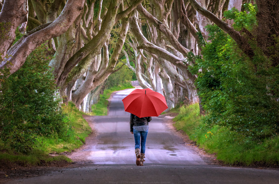 A walk in the Dark Hedges of North Ireland